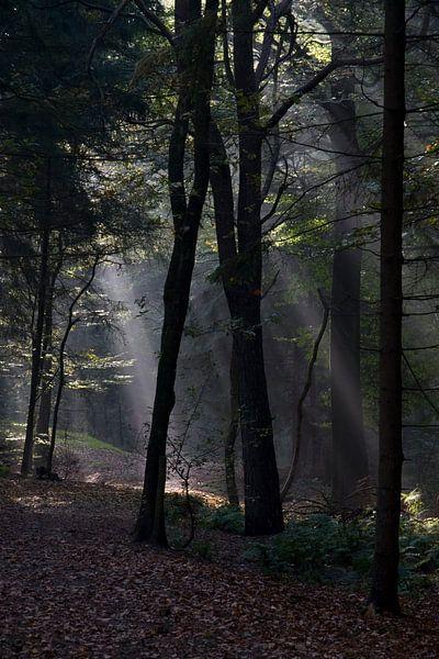Zonnestralen van Ronald Jansen