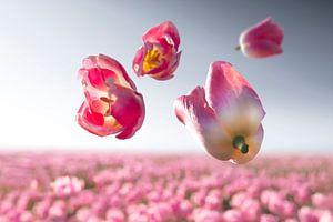 Flower Power - Dynasty van Claire Droppert