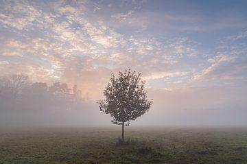 Baum im Nebel von Margreet Riedstra