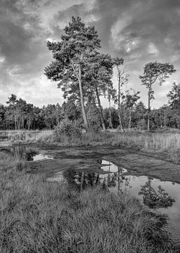 Rustige heide met een water pond_1 van Tony Vingerhoets