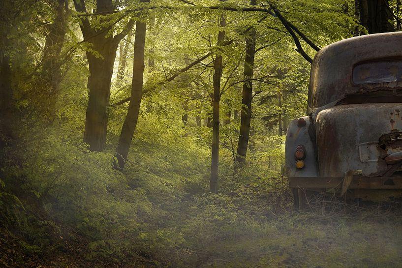 verloren in het bos van Kristof Ven