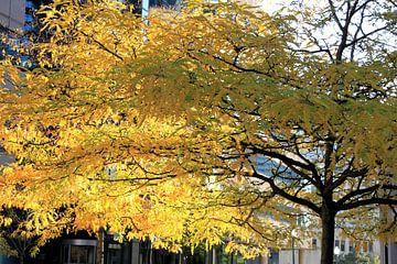 Boom in de herfstzon in Toronto van Anna van Leeuwen