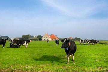 Niederländische Landschaft mit Kühen von Ivonne Wierink
