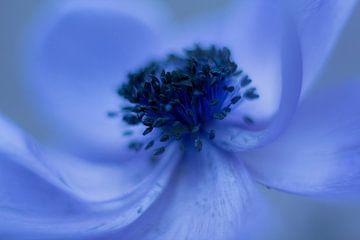 fleur bleue sur Vliner Flowers