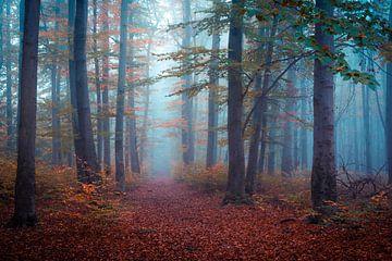 Nebel im Herbstwald von Martin Wasilewski