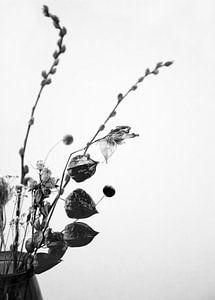 Trockenblumen in Schwarz und Weiß