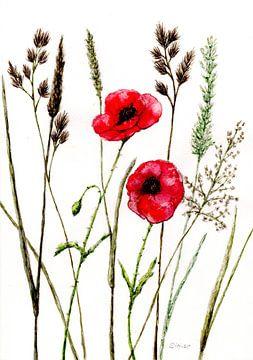 Mohnblumenwiese von Sandra Steinke