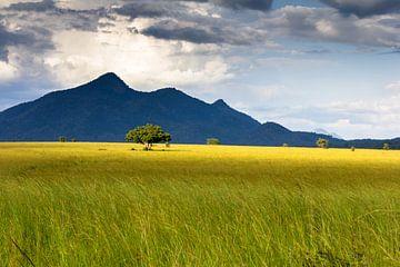 Afrikanische Savanne von Hans de Bruyne
