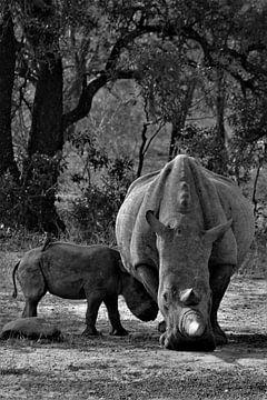 Nashorn und Baby von Christiaan Van Den Berg