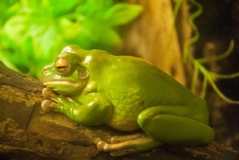 Zoo Antwerpen 8 van Cynthia Jansen