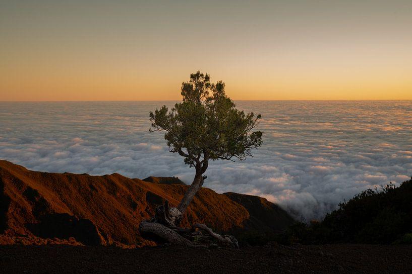 eenzaam boompje van Stefan Bauwens Photography
