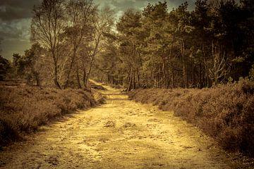 Wanderweg in der Natur von Stedom Fotografie
