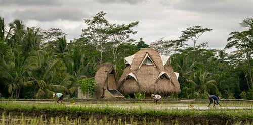 Ecologisch huis in rijstvelden op Bali van