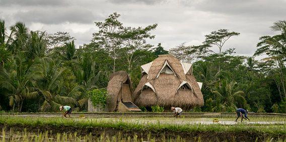 Ecologisch huis in rijstvelden op Bali