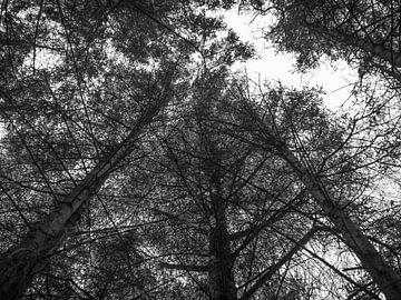 In de lucht met de bomen.
