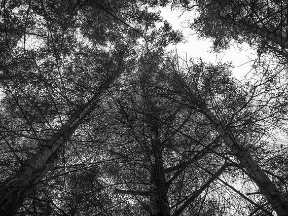 In der Luft mit den Bäumen.