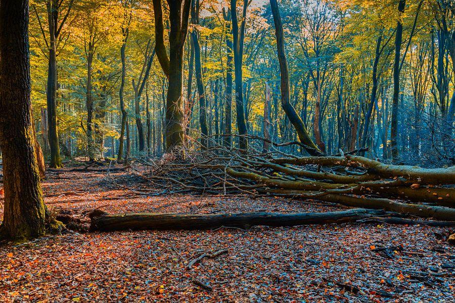 Herfst in het Leuvenumsebos van Dennis te Lintelo