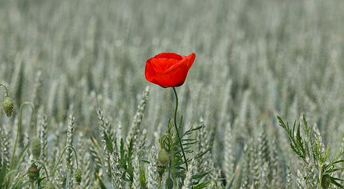 Flower in the Field...