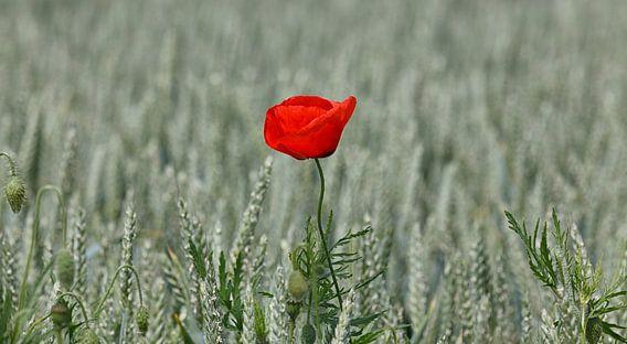 Flower in the Field... van Rob van der Teen