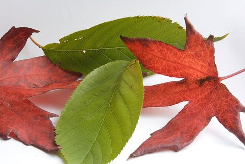 Minimalistische herfst van