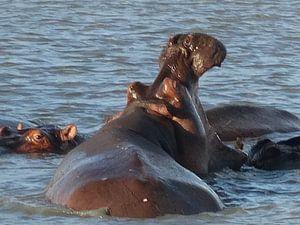nijlpaard van Elise Aaftink