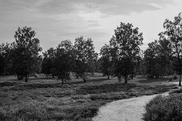 Heidelandschaft von Daniel Osthues