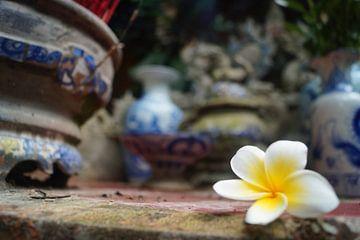 Witte bloem van Eva Toes