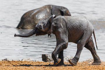 Baby Elefant sur Felix Brönnimann