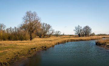 Kreek in de Brabantse Biesbosch van Ruud Morijn