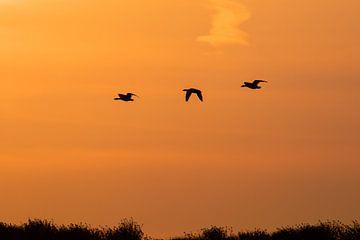 Oranje zonsondergang silhouet van Björn van den Berg