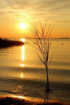 Dromen aan het meer. van Fotografie Sybrandy