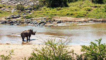 Nashorn von Photo By Nelis