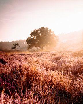 De paarse heide van Marleen Kuijpers