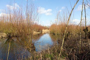 Natuur gebied De Biesbosch von Rijk van de Kaa