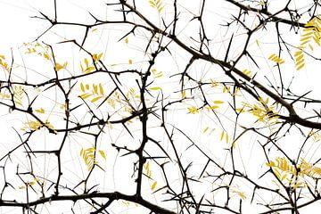 Yellow van Marieke van der Doef