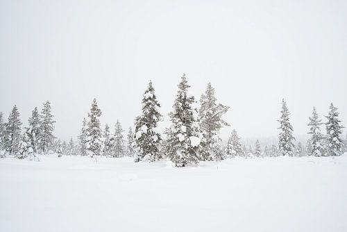 sneeuw op de kerstbomen in lapland