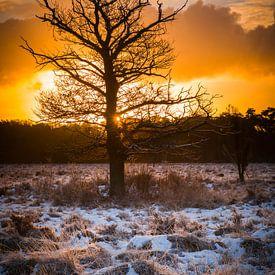 Buurserzand boom van Eriks Photoshop by Erik Heuver