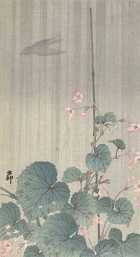 Begonia in de regen van Ohara Koson