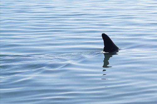 It is not a shark sur