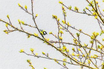 Koolmeesje tussen de lentebloesem (schilderij)