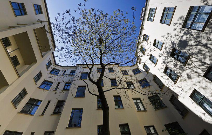 Boom op Berlijnse binnenplaats  van Eddie Meijer