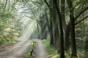 Die Sonne strahlt durch die Bäume. von cindy kuiphuis
