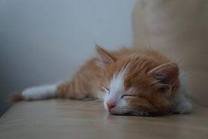 sleeping kitten van caitlin huijsing