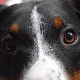 Puppy ogen sur Amber van den Broek