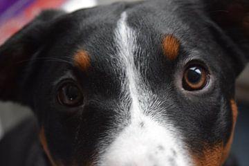Puppy ogen van Amber van den Broek