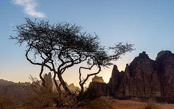 Baum von Jeroen Kleiberg