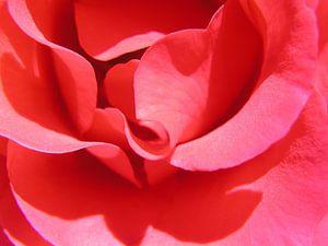 RoseClose van Rob Merkx