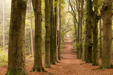 bospad in de herfst van Bernadet Gribnau