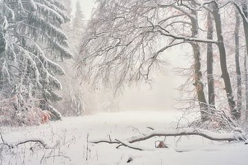Morgenlicht im Winter von Max Schiefele