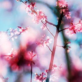 Lente!  (Springtime!) van Paula van den Akker